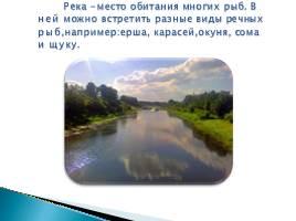 Речные рыбы, слайд 2