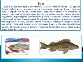 Речные рыбы, слайд 3